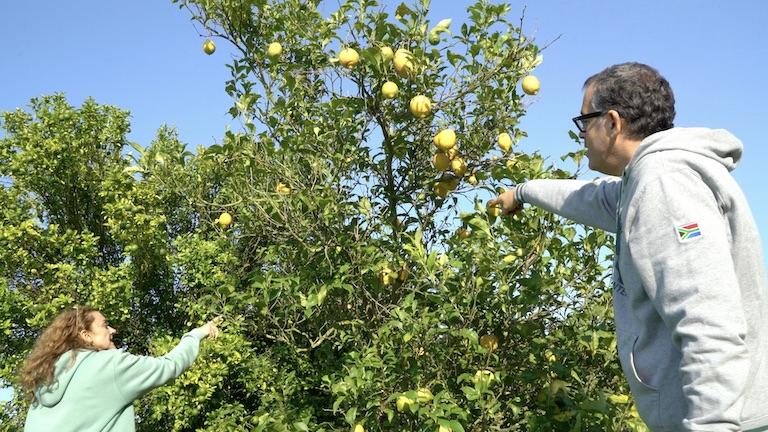 Maje y Berto recogiendo fruta